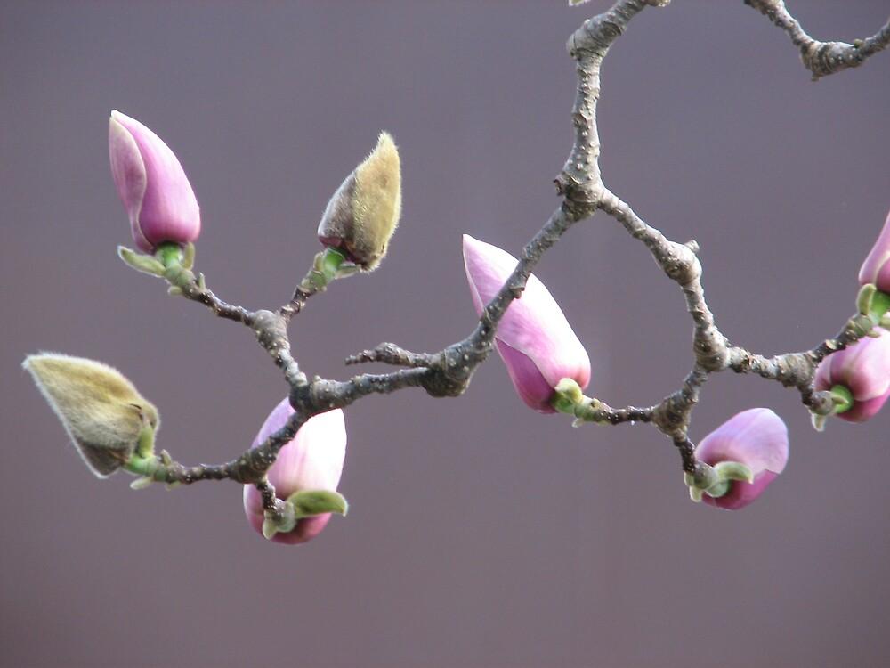 Buds of Beauty by gemstar
