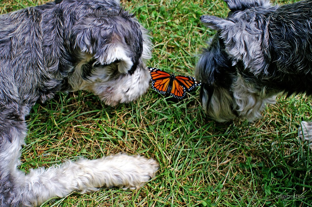 dog(s) & butterfly.... by elleboitse