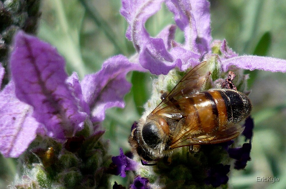 BEAUTIFUL BEE by EricKyle