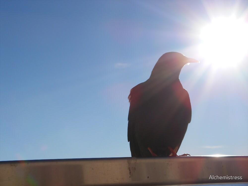 Bird in the Sunlight by Alchemistress