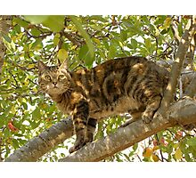 Torby in the Apple Tree Photographic Print