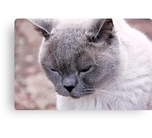 Purr-fection Canvas Print