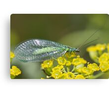 Green Lacewing Canvas Print