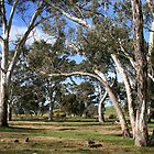 White Gums II by Stephen Mitchell