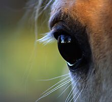 Horse close up by Robert Kiesskalt