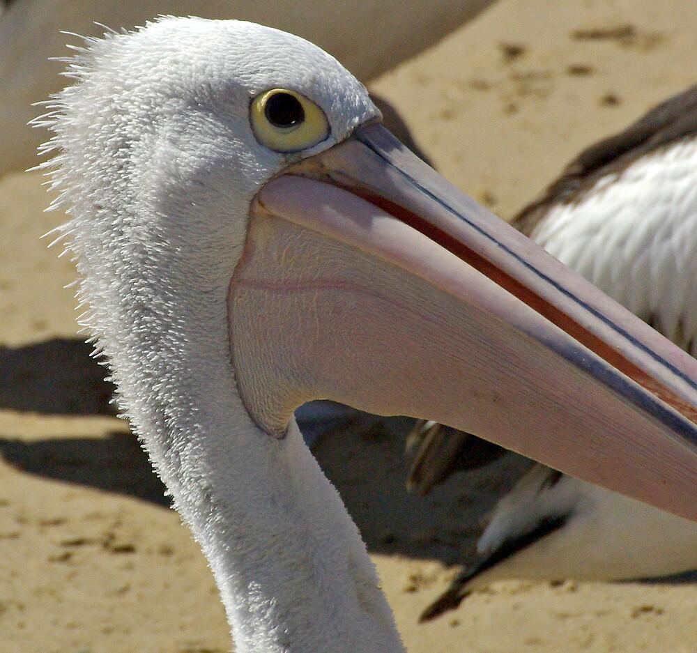 pelican close up by Robert Kiesskalt