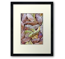 Sycamore Seeds Framed Print
