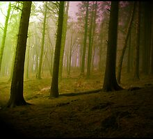 Enchanted Woods by futureal33