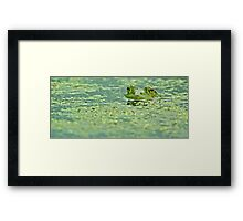 Algae Framed Print