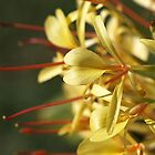 Sunny Yellow and Red Flowers - Kahli Ginger by Joy Watson