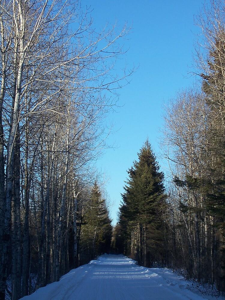 February Trail by Gene Cyr