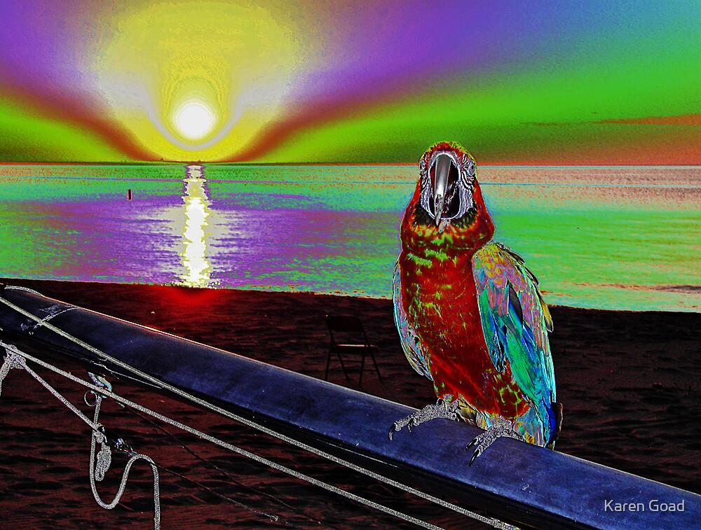 Parrot Sunset  by Karen Goad