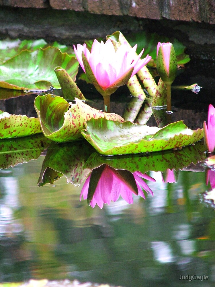 Reflections of a Waterlily by Judy Gayle Waller