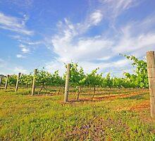 jane brook wines by Elliot62