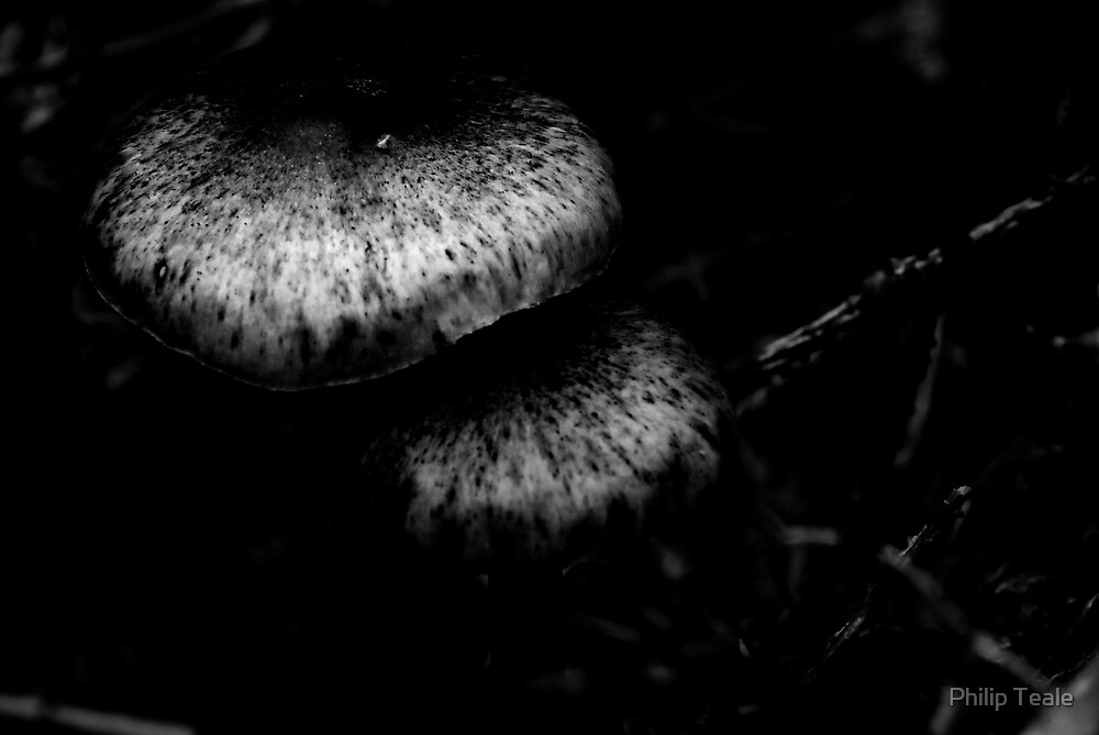 Fungi 2 by Philip Teale