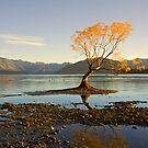 Morning glory by Mel Brackstone