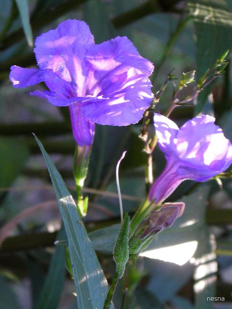 Purple Showers by nesna