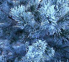 Blue Winter by cshphotos