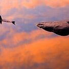 The Circle of Life by DawsonImages