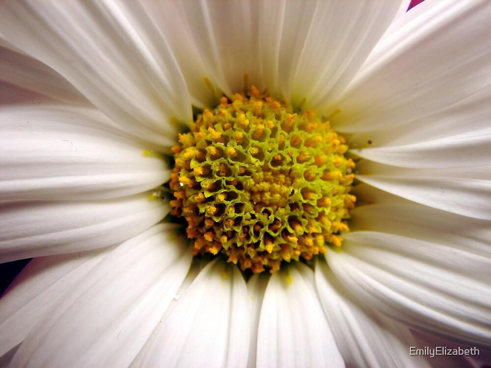 A Single Daisy by EmilyElizabeth