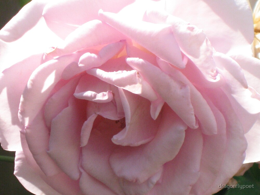Pink Passion by dragonflypoet