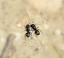 Ants in soft focus by Valeria Lee