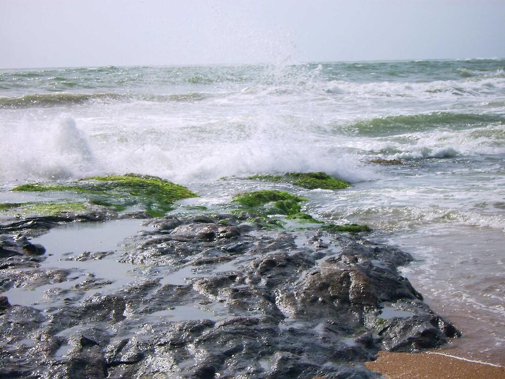 wave by Devika Fernando