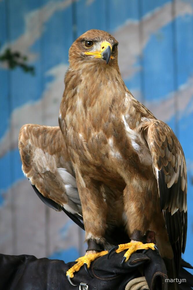 tawny eagle by martym