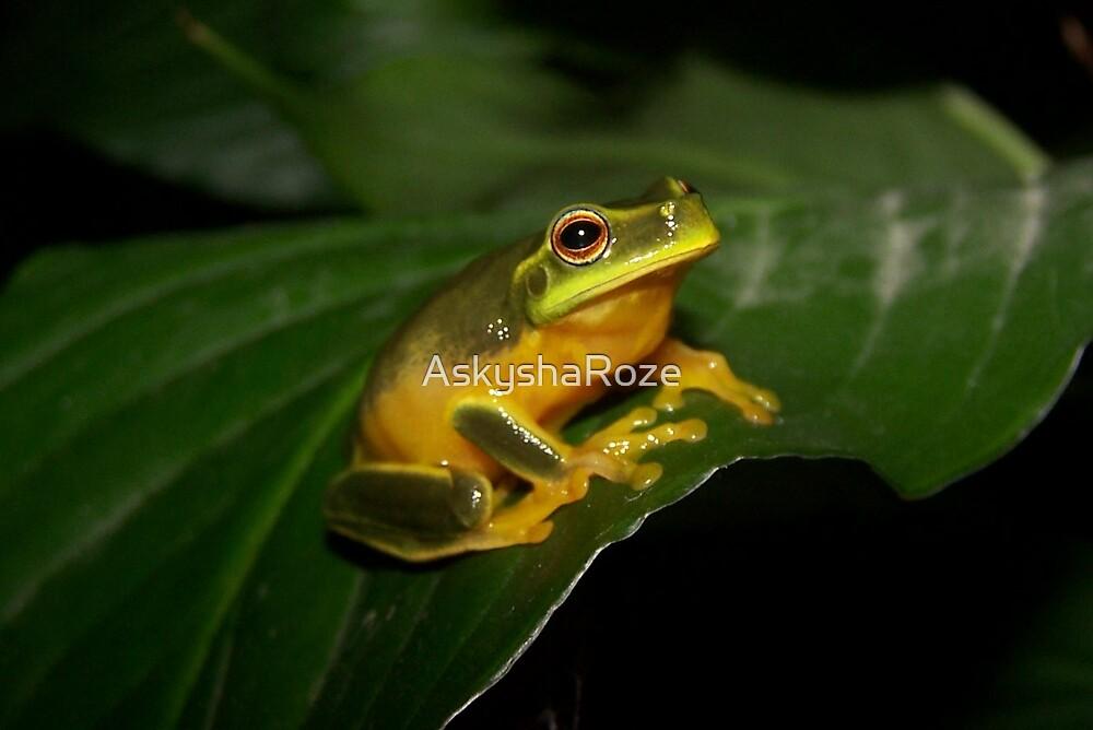 Frog on a Leaf  by Kylie  Metz