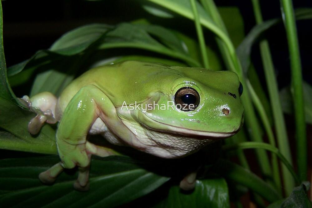 Big Frog by Kylie  Metz
