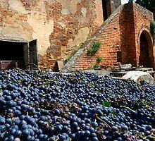 Grape harvest by SpikeFlutie
