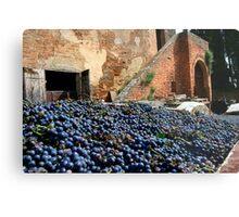 Grape harvest Metal Print