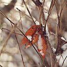Fall's Remnants by AbigailJoy