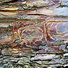 Bark Carvings by Kathie Nichols
