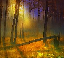 Evening Mist in the Woods by Bunny Clarke