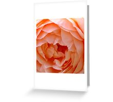 Apricot Rose Greeting Card