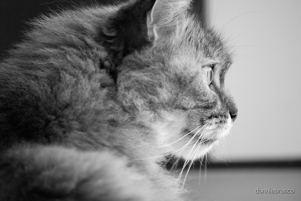 Dreamy Cat by donniebrasco