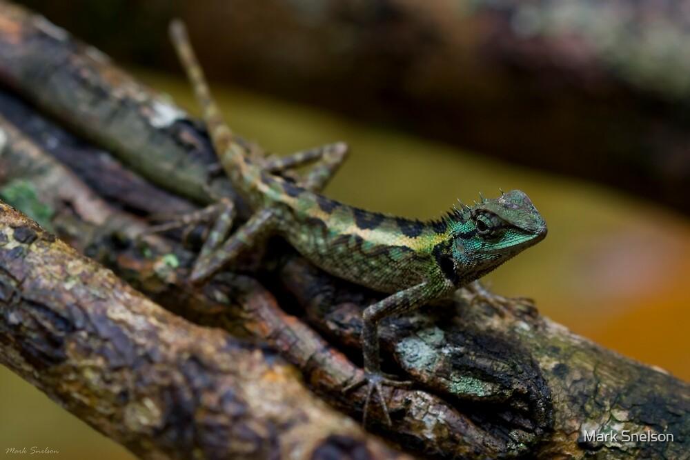 Lizard 1 by Mark Snelson