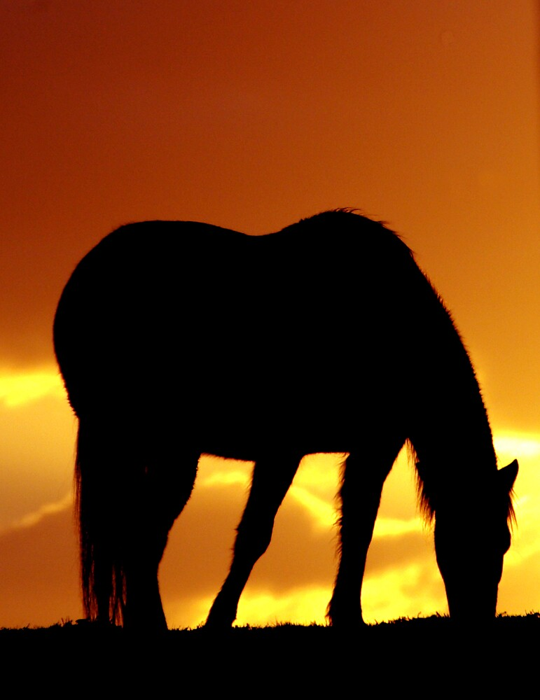 Horse Sunset by Robert Kiesskalt