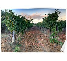 Vineyard in Tuscany Poster