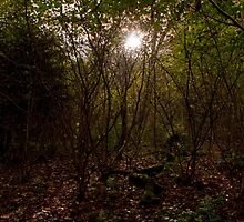 Autumn Magic in the Woods by EricHands