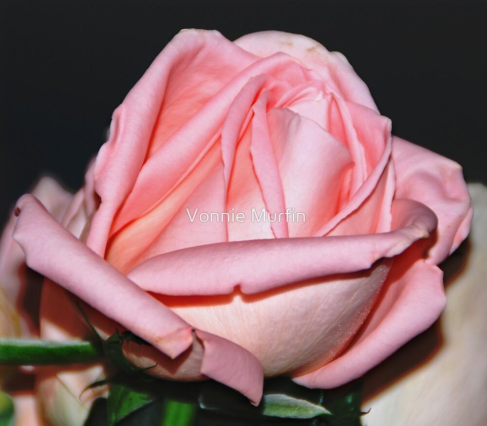 Anniversary Rose by Vonnie Murfin