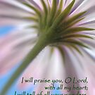 Heart of Praise by Lorraine Deroon