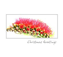 Australian Christmas Card Photographic Print