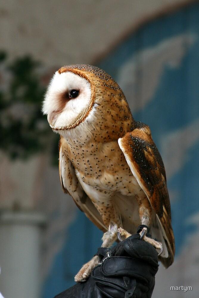 barn owl by martym