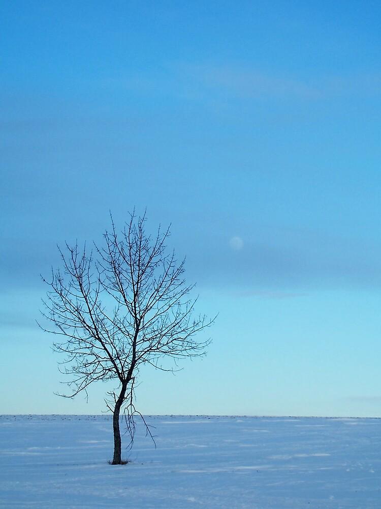 Winter Blue 1 by Gene Cyr