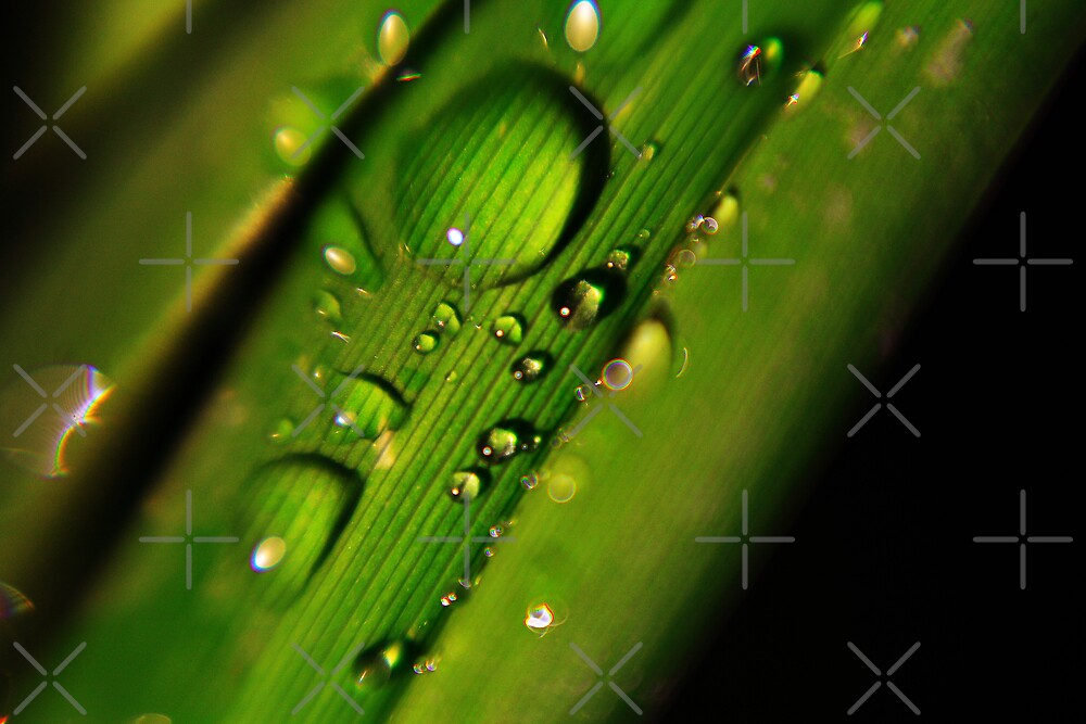 Macro Droplet 1 by Ben Pacificar