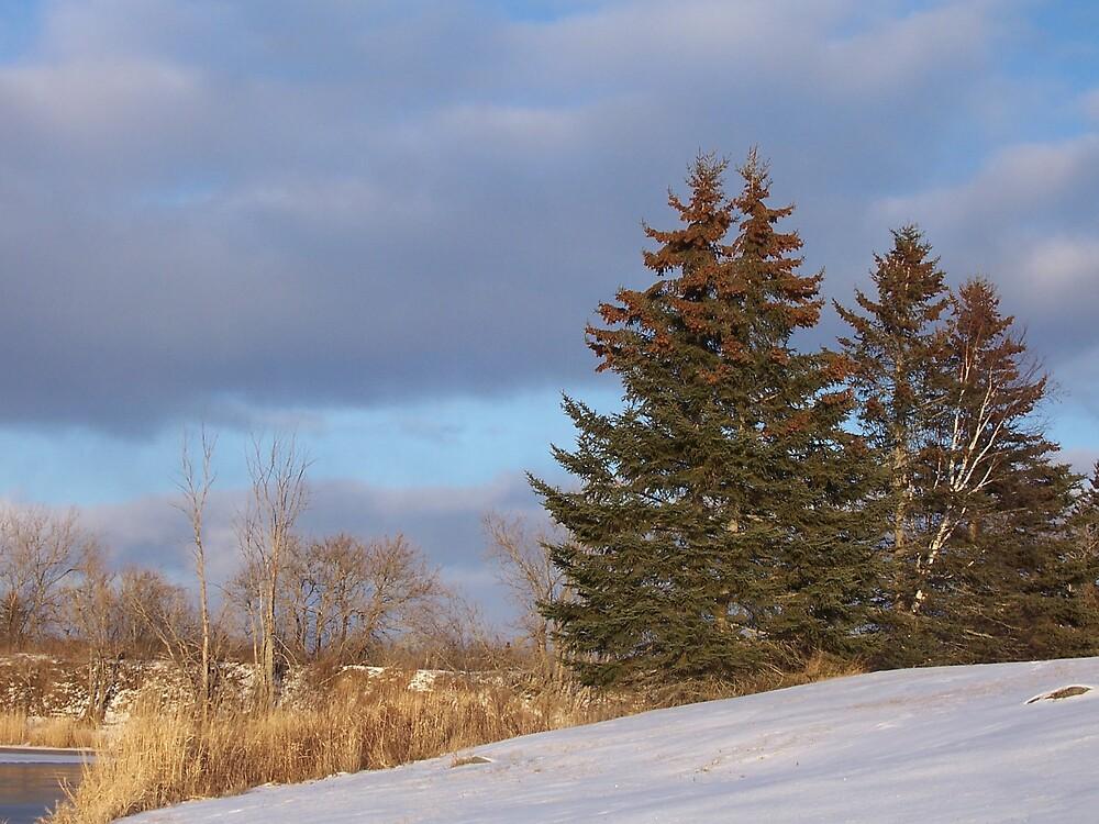 Winter Trees by Gene Cyr