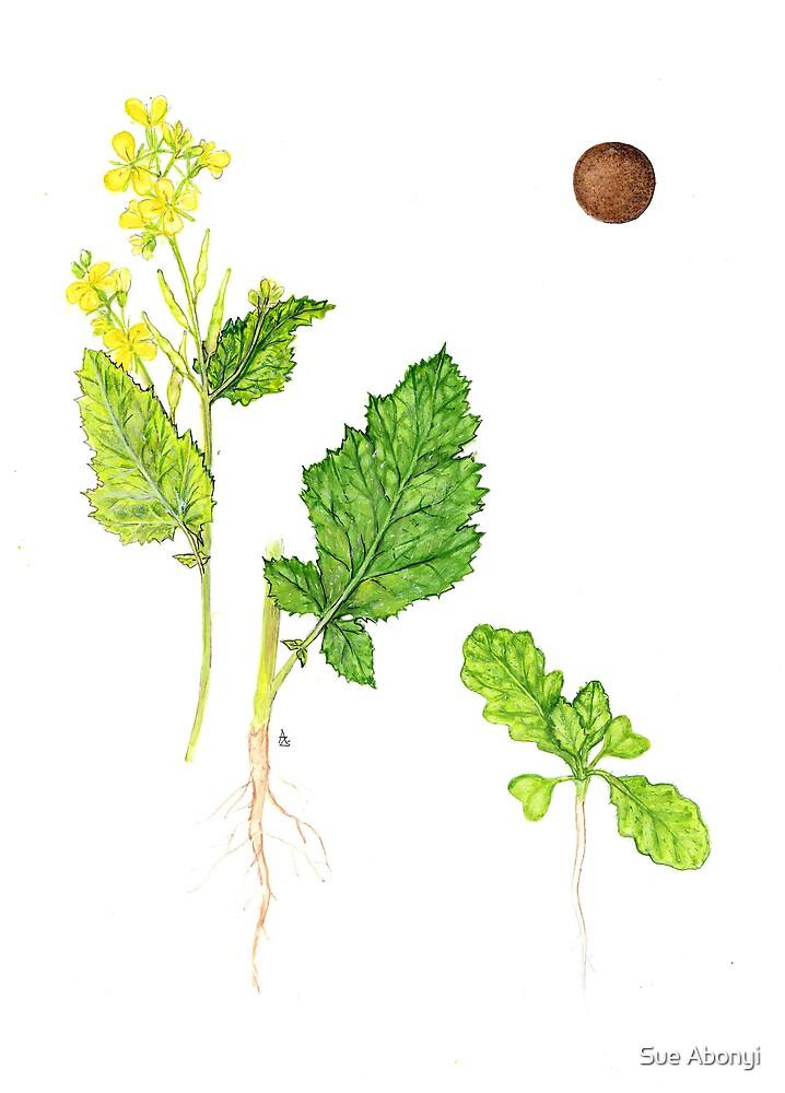 Wild mustard - Sinapis arvensis by Sue Abonyi