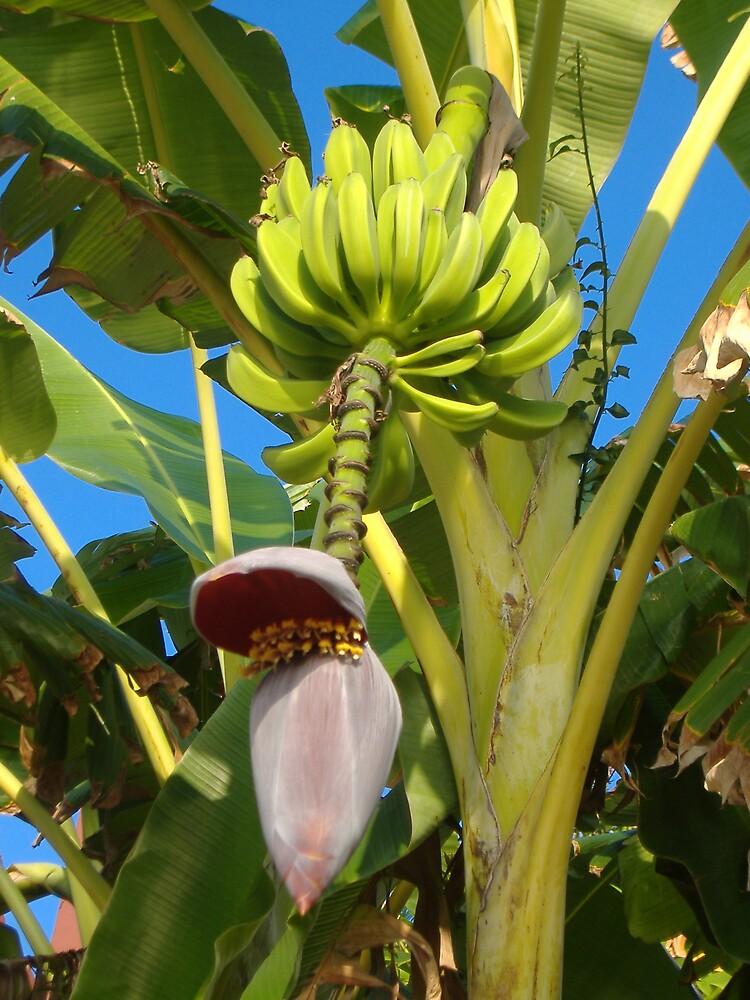 banana tree by Emma Fitzgerald